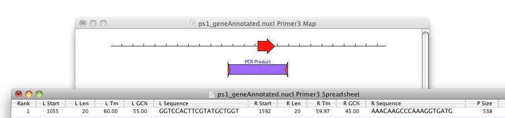 PrimerTestingPrimer3.png