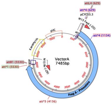 Fig1 VectorA nucl  Map