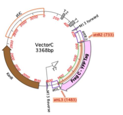 Fig 3 VectorC