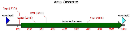 AmpCassetteMap.png