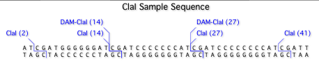 ClaISampleSequence.png