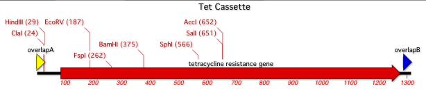TetCassetteMap.png