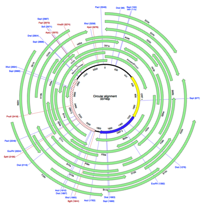 CircularSequenceSample Alignment axml Map
