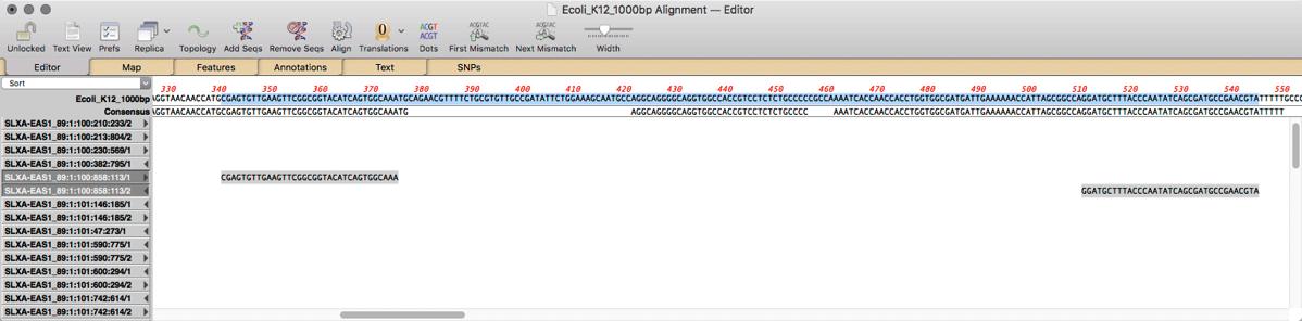 Ecoli K12 1000bp Alignment Editor